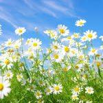 ビサボロールの化粧品としての美白効果と副作用!毒性についても