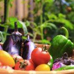 不溶性食物繊維の多い食べ物や食品一覧と働き!便秘の悪化は?